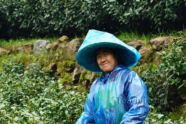 shifeng mountain longjing tea garden